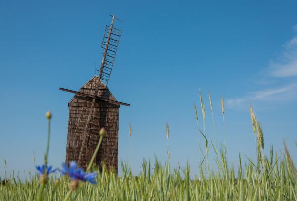 stary wiatrak w Sikowie- kliknij aby powiększyć