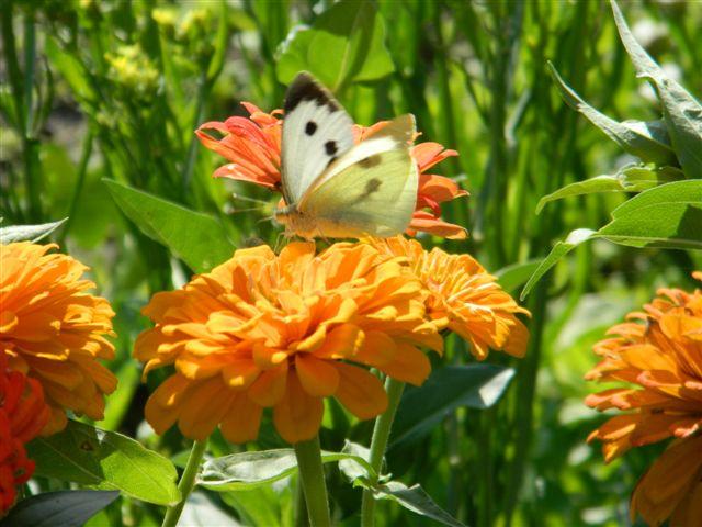 turystyka kwiaty motyl