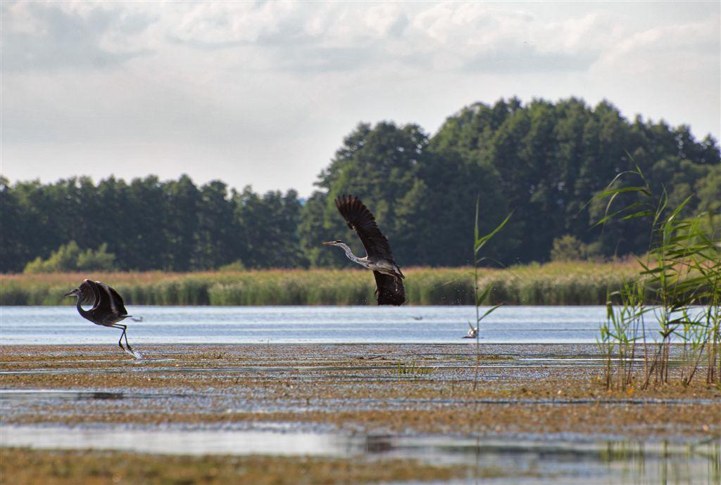 turystyka ptaki rzeka